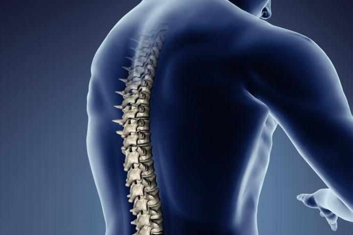 Une colonne vertébrale et sa position dans le dos
